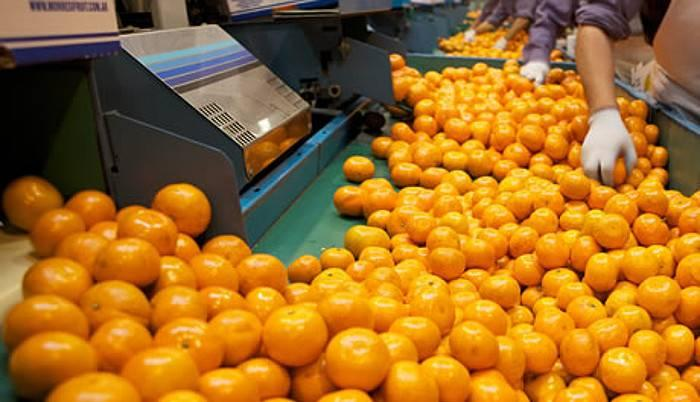 """Exportadores de cítricos piden """"racionalidad"""" a la hora de reclamar  aumentos salariales - Dos Florines"""